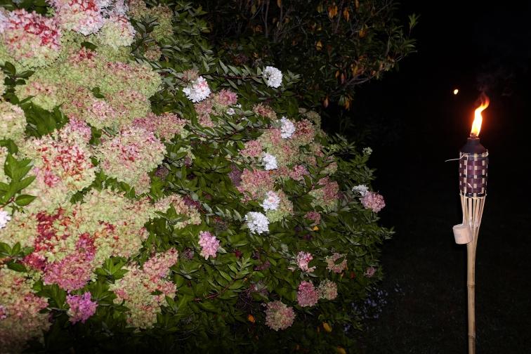 bush-lamp